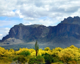 Saguaro in Spring at Superstions