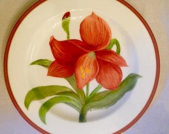 Amaryllis, (red) Plate