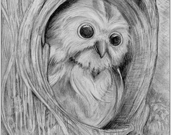 Owl coloring page (download)