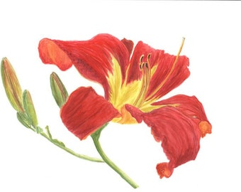 "Day Lily Watercolor ""Special for a Day, Lily"""