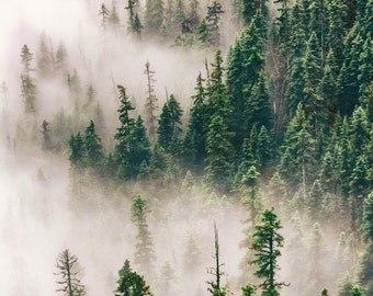 Moody Forest Photo, Trees in Fog, Washington North Cascades Mountains, Nature Photography