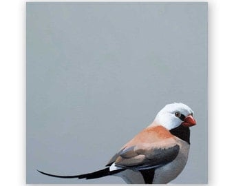 Shaft-tail Finch - 6 x 6 Wings on Wood Decor