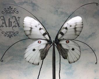 Fairy Wings - Gray Butterfly wings 591C -  For OOAK Art Dolls