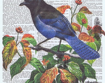 Blue.Bird,Antique Book Page. French.Colourful birthday gift, Altered,Printed in Paris,home decor,buy 3 get 1 FREE.feathers.avian.collage.art