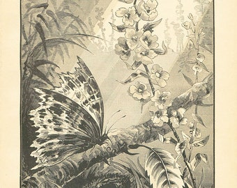 Vintage Butterfly Print Antique Christian Book Plate 1883 Steel Engraving