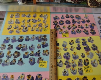 Choose your Real Pressed Viola Flowers Grown in Alaska  25+ pcs. 550 FL