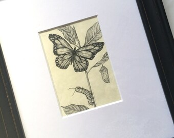 Framed Monarch Study Art, Original Monarch Ink Drawings, Monarch Butterfly Caterpillar Drawing, Framed Butterfly Crysalis Caterpillar Art