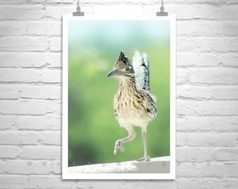 Roadrunner Picture, Bird Photography, Bird Art, Wildlife Print, Arizona Birds, Vertical Art, Desert Birds, Tucson, Pima County