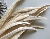 COQUE Tail Feathers,  Loose / Champagne, Light Beige  / 192