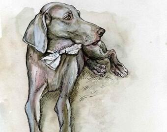 Weimaraner Dog Print Art