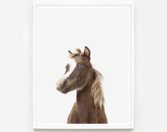 Baby Animal Nursery Art Print. Baby Horse Little Darling. Farm Animals Print. Animal Wall Art. Animal Nursery Decor. Baby Animal Photo.