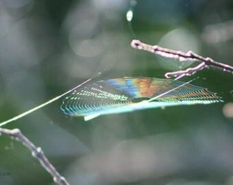 "Nature Photography, Spiderweb, Forest, Woodland, Spider, Rainbow, Sunlight, 6x9 or 8x12. ""Bewebbed, Rainbow No.2""."
