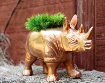 Copper look Rhinoceros Moss holder centerpiece-Zoo animals-Wild Rhino-Live moss-Preserved Moss