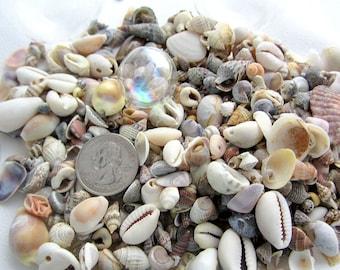 Beach Decor Seashells Mix - SMALL Nautical Decor Shell Mix - Beach Wedding Shells - Small Sea Shells -  Coastal Beach House Decor -  12oz