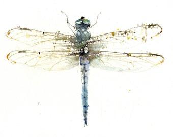 LIMITED edition print of my dragonfly wall art, home decor, nursery art, wildlife animal art.  hand signed, illustration, animal art