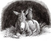 Kitten Donkey Original Artwork Graphite Drawing on Paper llmartin Stable Barn Farm