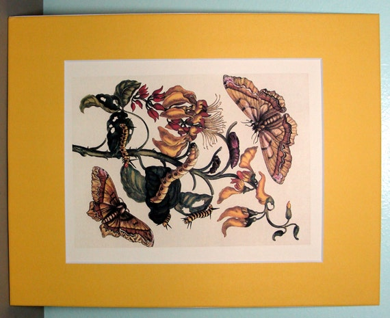 8 X 10 Inch Natural History Insect Print Matted And Ready To