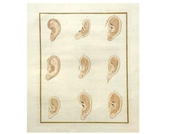 c. 1774 EAR ANATOMY ENGRAVING - original antique print - antique hand colored human anatomy engraving - physiognomy auricle pinna - no. 2