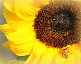ACEO Sunflower with a Bee, Yellow Sunflower, Bee on Sunflower, Closeup of Sunflower with Bee, Closeup of Sunflower, Bright Yellow Sunflower