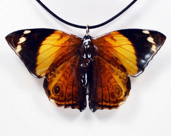 Real Butterfly Necklace - Smyrna Bloomfeldia - Hand Cast Resin