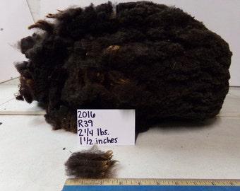 Black and Brown Half Black Merino Wool R39 2016