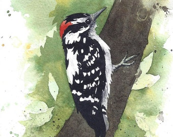 Downy Woodpecker Watercolor Painting - Fine Art Archival Print- Signed Giclée- Limited Edition Bird Art by Laura D. Poss