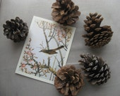 5 large pinecones from the western us, plus a high quality bird card