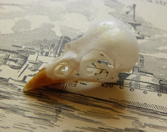 Cruelty Free - No. C8 - Post Office Window - House Sparrow Skull
