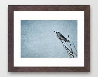 Fine Art Print Resting Hummingbird