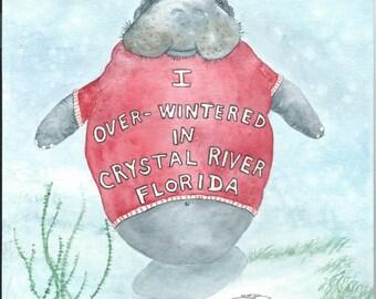 Original watercolor Tee Shirt Baby sea cow Florida 9 x 12 manatee bowman seacow I overwintered in Crystal River Florida