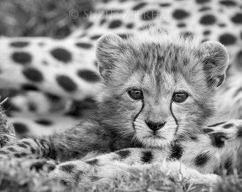 Baby Cheetah Photo, Black and White Print, Baby Animal Photography, African Wildlife, Nursery Print, Baby Nursery Decor, Safari Nursery Art