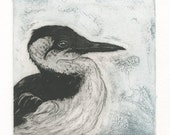 Common Murre, Original Fine Art Etching of Seabird