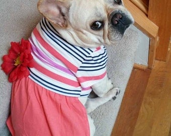 French Bulldog Frenchie Cotton Knit Summer Dress in Coral