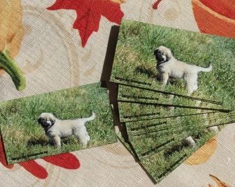 Caucasian Ovcharka puppy magnet