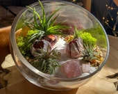 Modern Air Plant Terrarium Kit by Midnight Blossom - DIY Terrarium Featuring Barnacles, Shells, Rose Quartz and More - Incl. Four Airplants