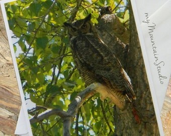 Great Horned Owl Photo Note Card. Bird Note Card. Nature Photography. Wildlife. Montana.