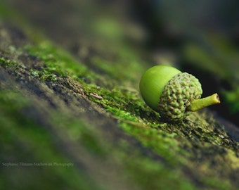 Woodland, Green, Moss, Fairy Tale, Nature Photography, Emerald, Acorn, Fall, Autumn