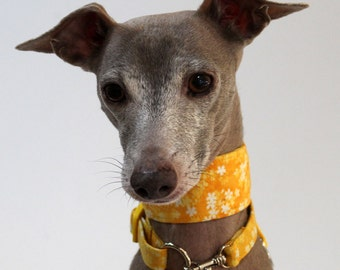Italian Greyhound -Sunshine Floral -  Martingale Style Collar with optional coordinating ID Collar and Leash - see details for information
