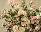 Natural Dry MINI Roses - Natural Color - Rustic Country Wedding -Roses for Weddings, Luck, Love, Romance and all other Matters of the Heart-