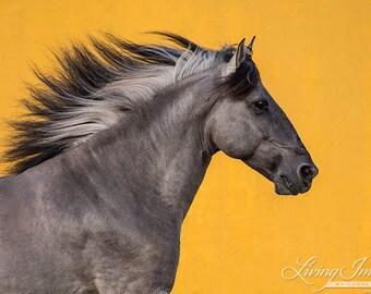Sorraia Runs - Fine Art Horse Photograph - Horse - Wild Horse - Horse Photograph - Fine Art Print