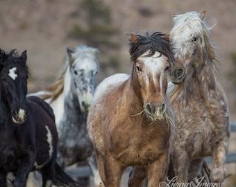 Four Adobe Appys Run - Fine Art Wild Horse Photograph - Wild Horse - Adobe Town - Adobe Appys
