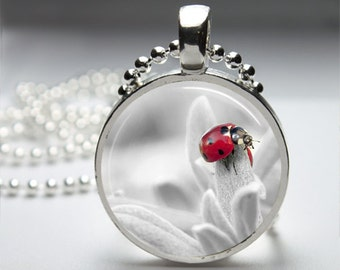 Red Ladybug Photography Round Pendant Necklace with Silver Ball or Snake Chain Necklace or Key Ring