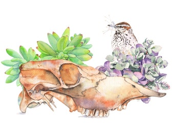 Skull, succulents and Cactus wren print of watercolour painting - A3 size largest print - SSC0816