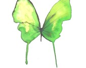 """exotic green butterfly 8 X 10"""" original watercolour painting"""