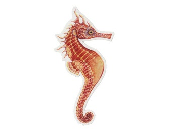 Seahorse in Orange Magnet / Nature Art / Refrigerator Magnet / Office Magnet / Party Favor / Small Gift