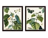 Nature Study Collage No. 23, Botanical Print Set, Natural History Art, Giclee Canvas Prints, Vintage Botanical, Butterfly Print, Poster, Art