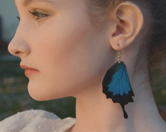 REAL blue butterfly wing earrings - Butterfly Jewelry, Butterflies, Dangle, Nature, Natural, Blue