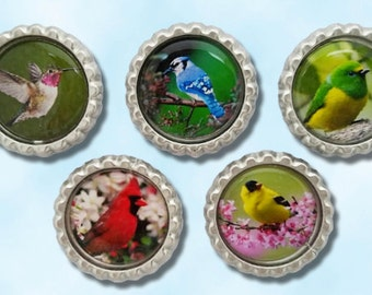Birds, cardinal, blue bird, humming bird, yellow finch, Bottle cap magnets