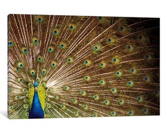 iCanvas Proud as Peacocks I Gallery Wrapped Canvas Art Print by Laura Marshall