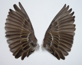 Real Sparrow Wings, Bird Wings